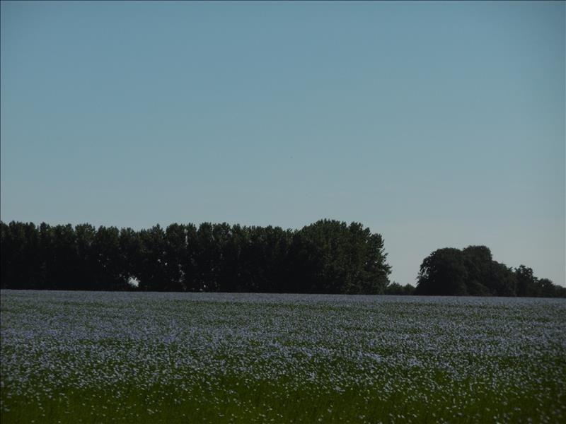 Vente terrain Cliponville 48000€ - Photo 1