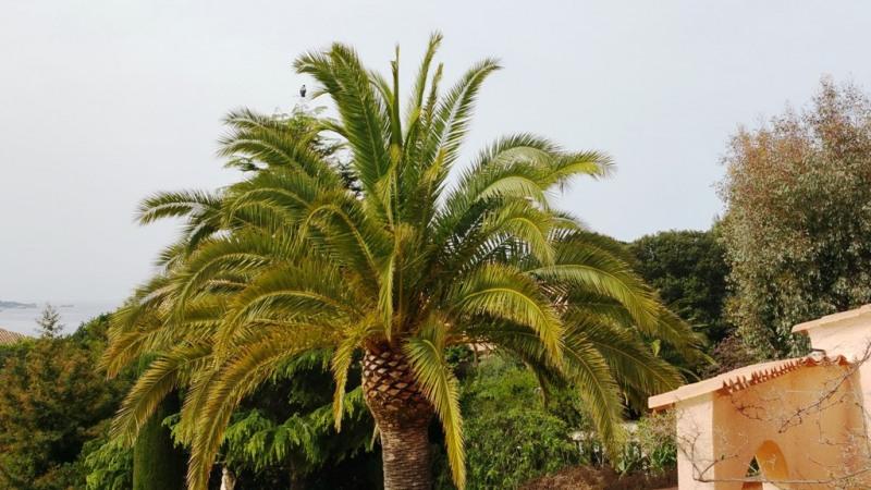 Vente maison / villa Porticcio 840000€ - Photo 8